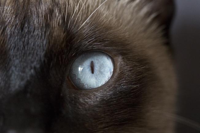 cat-1144069_1920