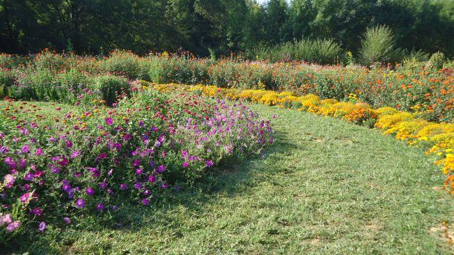 flowergarden-2