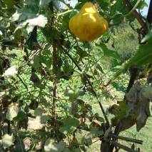 gourdgarden-2