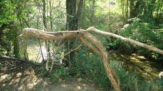 woodsculp-2