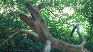 woodsculp-3