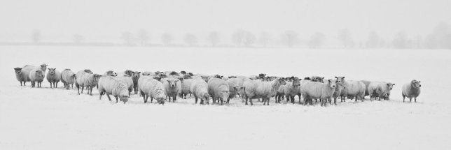 winter-1142029_1280