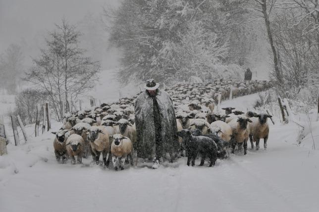 winter-3195872_1920