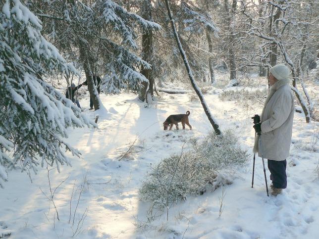 winter-437499_1920
