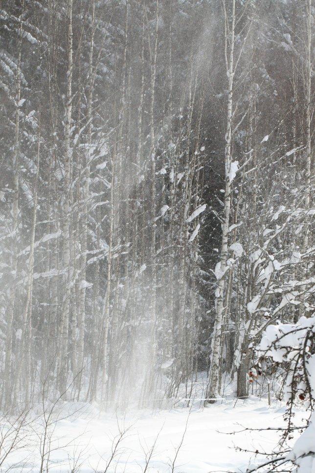 winter-58581_1920